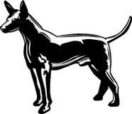 Glabro messicano di Xoloitzcuintle di profilo royalty illustrazione gratis