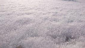 Glacée di superficie Fotografia Stock Libera da Diritti