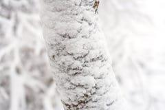Glacé au-dessus de la branche d'arbre Photographie stock