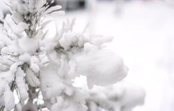 Glacé au-dessus de la branche d'arbre Foyer sélectif Photographie stock