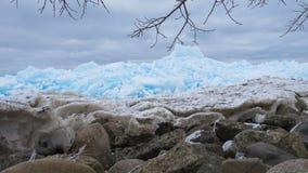 Glace bleue et grise sur le rivage de la baie géorgienne Images libres de droits
