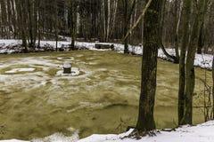glace Brown-jaune sur un étang de forêt Image stock
