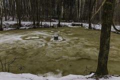 glace Brown-jaune sur un étang de forêt Images libres de droits
