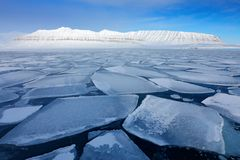 Glace dans l'océan Crépuscule d'iceberg dans le Pôle Nord Beau paysage Océan de nuit avec de la glace Ciel bleu clair Terre de gl images libres de droits