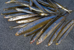 glace de 2 poissons Image stock