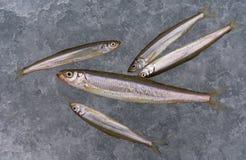 glace de 8 poissons Photos stock
