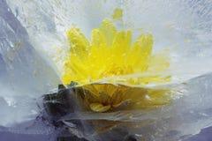 glace de fleur Images stock