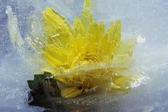 glace de fleur Images libres de droits