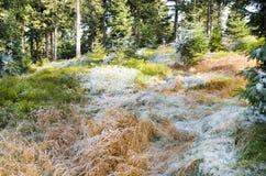 Glace de givre sur une herbe image libre de droits