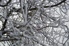 glace et neige sur les branches Photographie stock