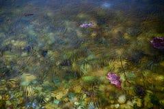 Glace mince sur la surface d'un lac Images libres de droits