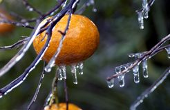 Glace orange Images libres de droits