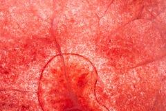 Glace rouge background2 photo stock