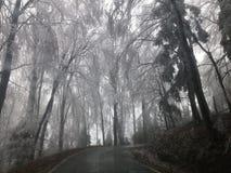 glace sur des arbres Photo libre de droits