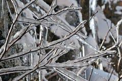 Glace sur des branchements de l'hiver Photo stock