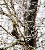 glace sur l'arbre Photos stock