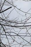 glace sur l'arbre Photographie stock