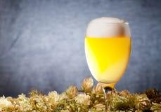 Glaces de bière avec l'houblon Image libre de droits