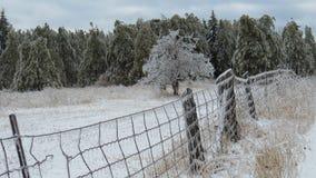 Glacez sur la barrière, les arbres et le champ après la tempête Photo stock