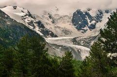 Glaciär Morteratsch i Swizterland fjällängar Arkivbild
