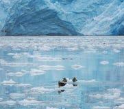 Glaciär på Alaska Arkivfoton
