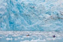 glaciär som kayaking Arkivfoto