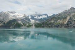Glaciärfjärd, Alaska Royaltyfria Bilder