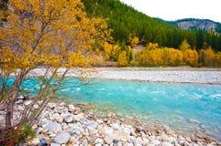 Glaciärnationalpark - British Columbia Fotografering för Bildbyråer