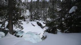 Glaciärnationalpark som snöar i vinter stock video