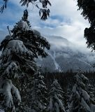 Glaciärnationalpark som snöar i vinter Arkivfoto