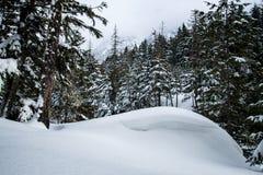 Glaciärnationalpark som snöar i vinter Arkivfoton