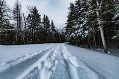Glaciärnationalpark som snöar i vinter Royaltyfri Bild