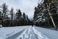 Glaciärnationalpark som snöar i vinter Fotografering för Bildbyråer