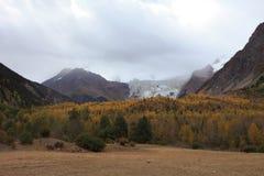 glaciärmidui Arkivbilder