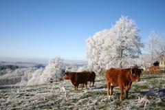 Glacial Photo libre de droits