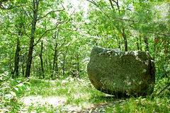 Glacial Erratic in the Forest royalty free stock photography