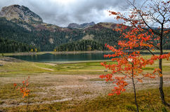 Glacial lake in autumn. Glacial lake, clouds and small tree in fall colors Stock Images