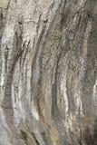Glacial pothole detail Stock Images