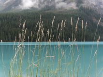 Glacial waters with azure blue colors create a tranquil scene near Lake Louise Stock Image