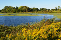 Glacial Waterway. A glacial waterway in Wisconsin with goldenrod flowers in the foreground Royalty Free Stock Photography