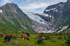 glaciar Fotografía de archivo libre de regalías