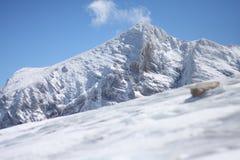 Glaciar de Dachstein Fotografía de archivo libre de regalías
