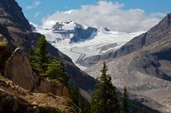 Glaciar de Peyto Imagen de archivo libre de regalías