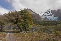 Glaciar Piedras Blancas,巴塔哥尼亚,阿根廷 免版税图库摄影