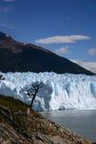 Glaciar y árbol Foto de archivo