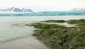 Glacier in The Arctic. View of a glacier entering The Arctic Ocean royalty free stock photography