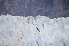 Glacier and bald eagle Royalty Free Stock Photos
