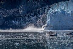 Glacier Bay escénico en Alaska imágenes de archivo libres de regalías