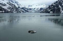 Glacier Bay National Park Alaska Inside Passage Stock Photography
