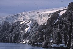 Glacier, bird cliffs and murres. Murres fly around a glacier-topped bird cliff in the Arctic Stock Image